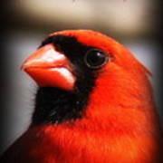 6751-010 Cardinal - Miss You Art Print