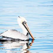 Brown Pelican Art Print