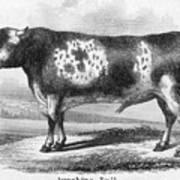 Cattle, 19th Century Art Print