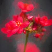 Jatropha Blossoms Painted Art Print