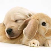 Rabbit And Puppy Art Print