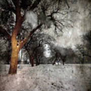 The Winter Time Art Print