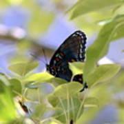7759 - Butterfly Art Print