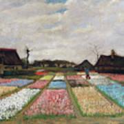 Flower Beds In Holland Art Print