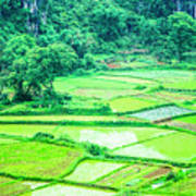 Rice Fields Scenery Art Print
