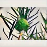 Swan Plant Art Print