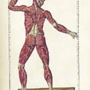 The Science Of Human Anatomy Art Print