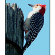 #8671 Woodpecker Art Print