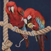 8x10p Art Print