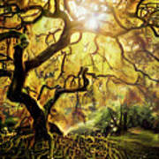 9 Abstract Japanese Maple Tree Art Print