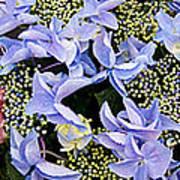 Close-up Of Flowers Art Print