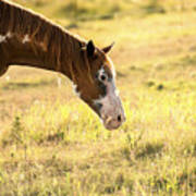 Horse In The Countryside  Art Print