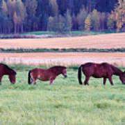 Horses Of The Fall Art Print