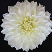 Macro Shot Of Flower Art Print