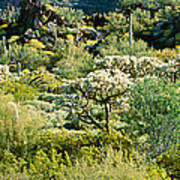 Saguaro Cactus Carnegiea Gigantea Art Print