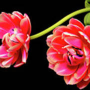 Tulip Floral Arrangement Art Print