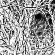 A Bayou Climbing Tree Art Print