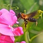 A Bee I Cee Art Print