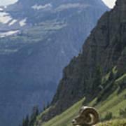 A Bighorn Sheep Ram, Ovis Canadensis Art Print