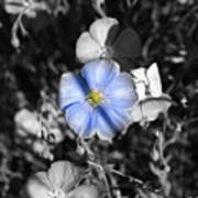 A Blue Flax Special Art Print