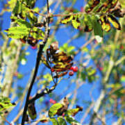 A Branch Standing Out From The Crowd Art Print