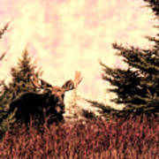A Bull Moose Dream Art Print