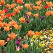 A Burst Of Spring Color Art Print