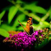 A Butterflies World  Art Print