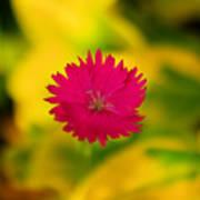 A Button From The Blur Art Print