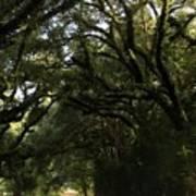 A Canopy Of Trees Art Print