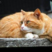 A Cat Named 'kitty' Art Print