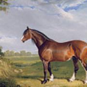 A Clydesdale Stallion Art Print by John Frederick Herring Snr