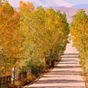A Colorful Country Road Rocky Mountain Autumn View  Art Print