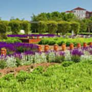 A Corridor Of Purple Sage Flowers And Stachys Lanata Sunlit Art Print