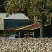 A Cotton Field Surrounds A Small Farm Print by Medford Taylor