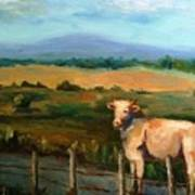 A Cow Up In Missouri Art Print