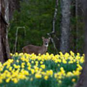 A Deer And Daffodils 4 Art Print
