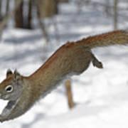 A Devil Named American Red Squirrel Art Print
