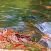 Flowing Water Fall Leaves Closeup Art Print