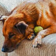 A Dog And His Tennis Ball Art Print
