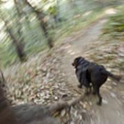 A Dog Backpacking On Pine Ridge Trail Art Print