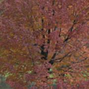 A Fall Day At Como Art Print