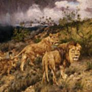 A Family Of Lions Art Print