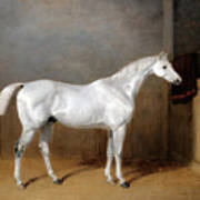 A Favourite Grey Horse Belonging To George Reed Standing In A Loose Box Art Print