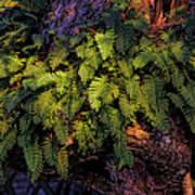A Fern Botanical By H H Photography Of Florida Art Print