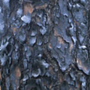 A Fire Scarred Tree Trunk Whose Thick Art Print