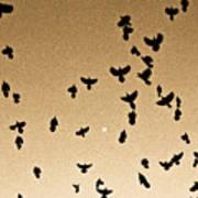 A Flight Of Grackles Circling The Moon Art Print