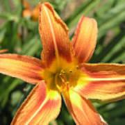A Flower At The Farm Art Print