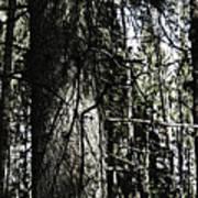 A Forest Walk Art Print