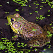 A Frog's Reflection Art Print